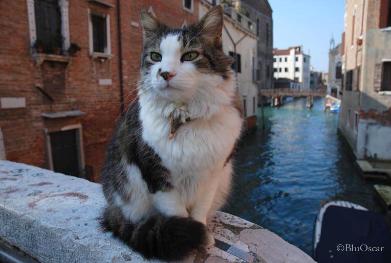 Gatti veneziani 19 02 2010 N 2