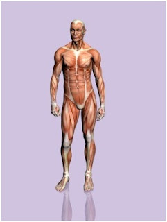 Tips útiles sobre nuestro cuerpo