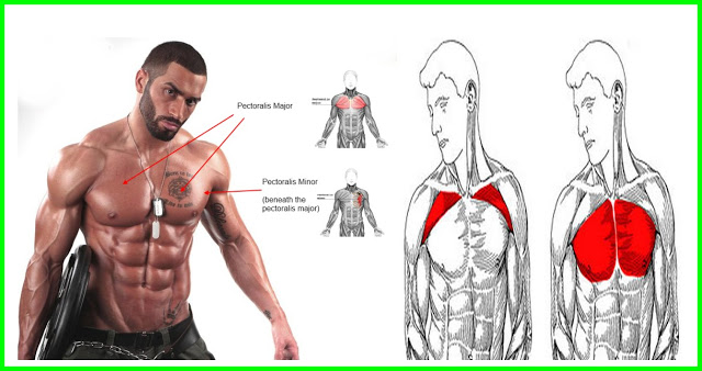 Top 8 Tips And Guide For Building A Big Upper Chest