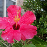 Gardening 2011 - 100_9187.JPG