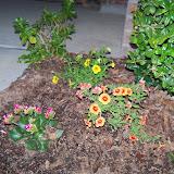 Gardening 2014 - 116_1152.JPG