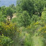 Les Hautes-Courennes, 500 m, Saint-Martin-de-Castillon (Vaucluse), 15 juin 2015. Photo : J.-M. Gayman