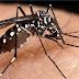 Paraíba tem aumento nos casos prováveis de arboviroses com mais de sete mil pessoas com dengue, chigungunya e zika