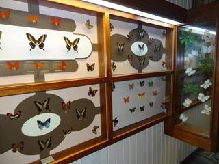 2016.03.14-007 papillons