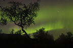 LEVE LE VOILE   Aurore boréale dans l'automne lapon. Cette aurore aura duré près de 2h30 !