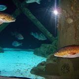 Downtown Aquarium - 116_3906.JPG