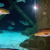 Downtown Aquarium - 116_3906.JPG