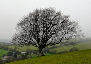 Winter Tree, Treborough, Somerset