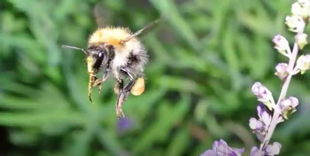 Bumble Bee vs. Gravity