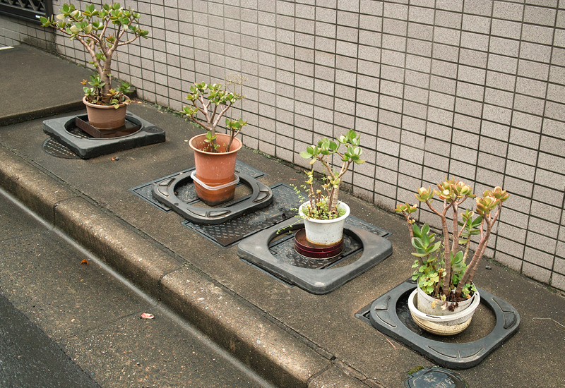 Pot plant composition (courtesy of Tokyo-based designer Edith Prakoso)