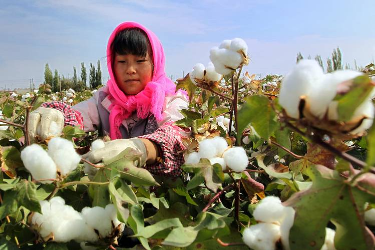 Harvest time last September in Hami, also in the Xinjiang Uighur Autonomous Region.