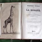 Musée de l'Île-de-France : La Girafe