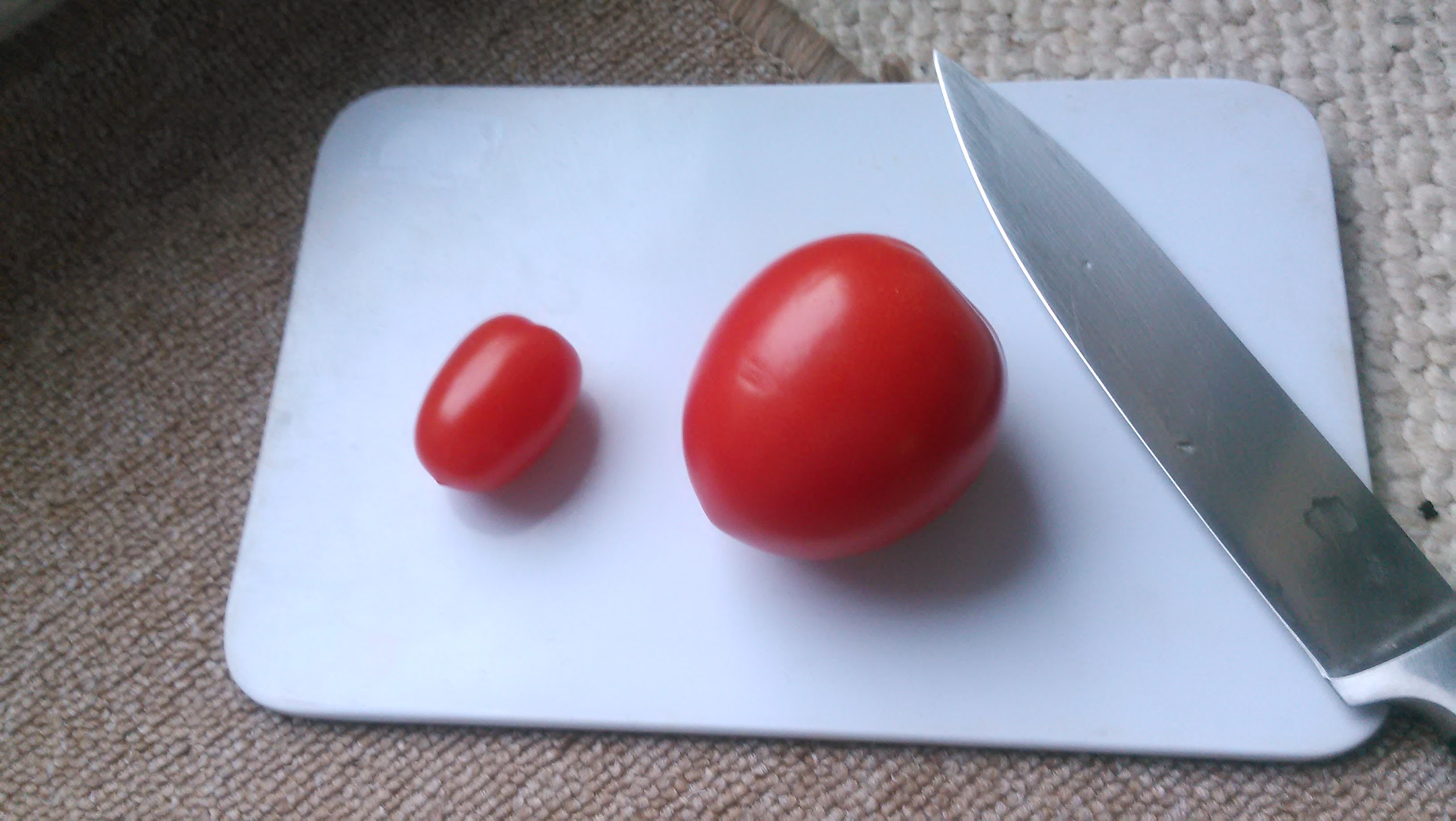 tomaten mark 39 s gartenblog tomatenziehen einfacher geht. Black Bedroom Furniture Sets. Home Design Ideas