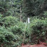 Atewa Range Forest Reserve (Ghana), 8 janvier 2006. Photo : J. F. Christensen