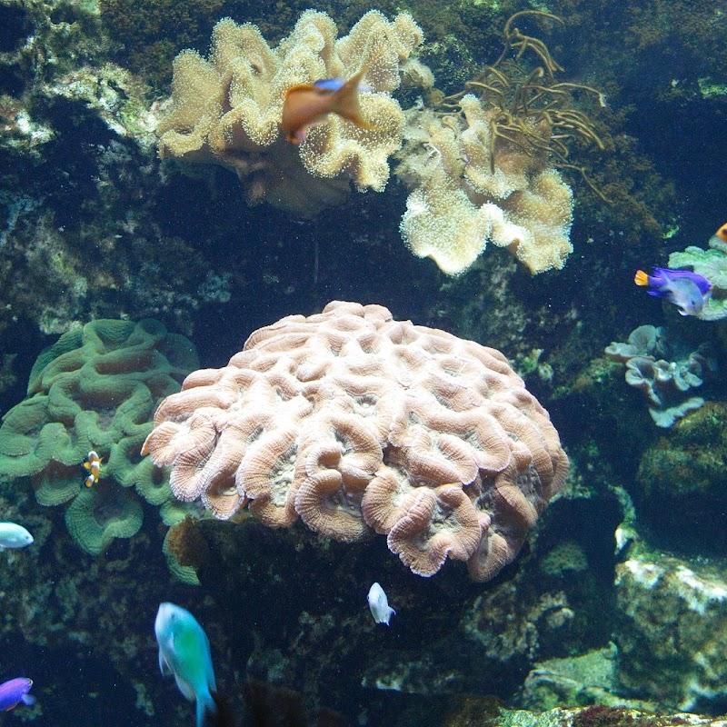 Aquarium_09.JPG