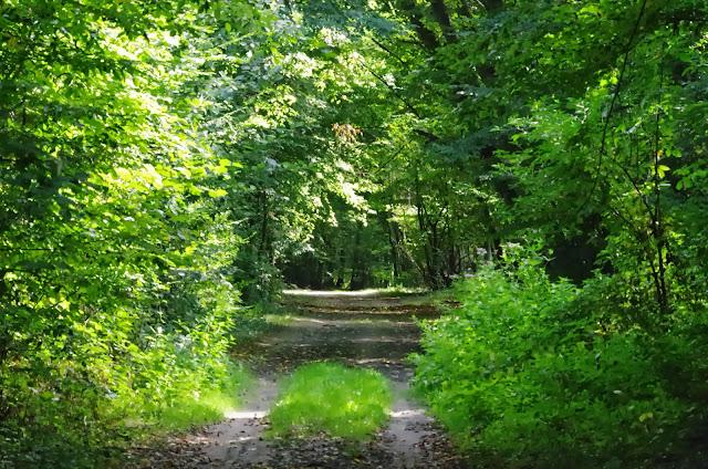 Chemin forestier. Les Hautes-Lisières (Rouvres, 28), 21 septembre 2013. Photo : J.-M. Gayman