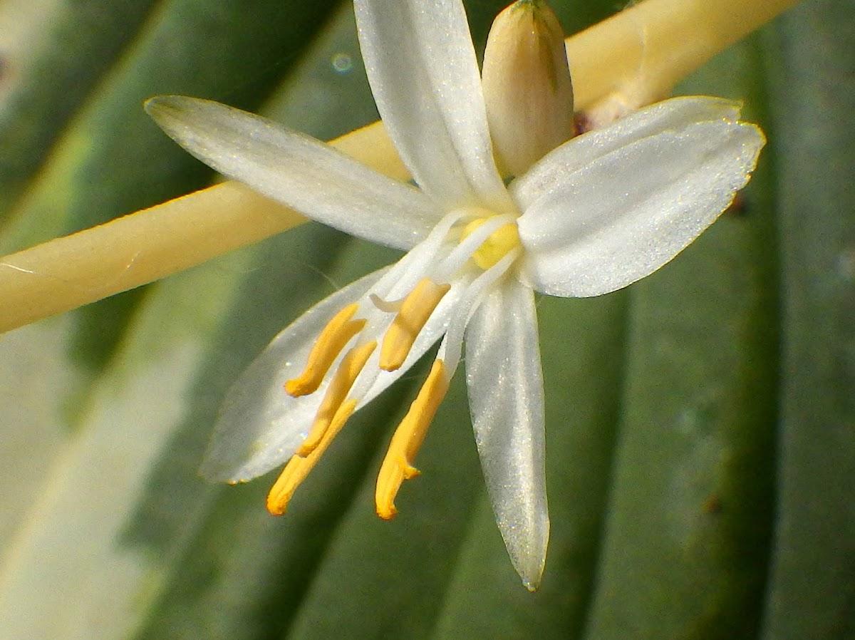 花の様子2