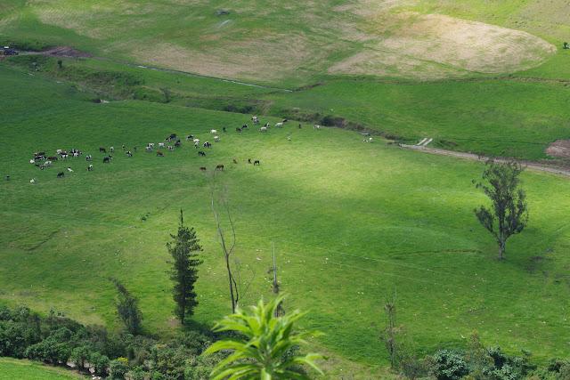 Près de Nono, 3100 m (Pichincha, Équateur), 12 décembre 2013. Photo : J.-M. Gayman