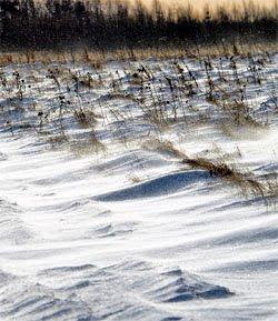 Ветер зимняк на Валдае.