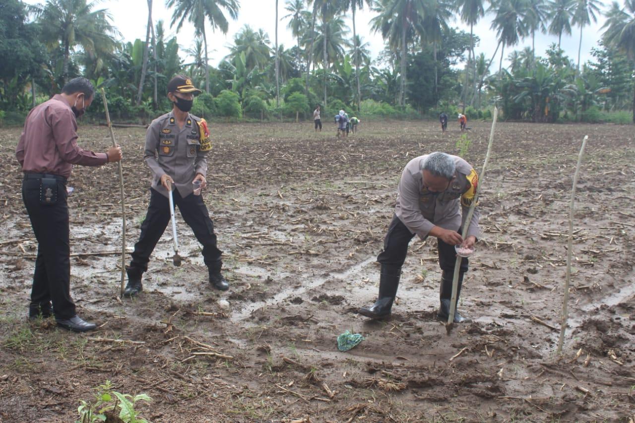 Songsong New Normal Kapolres Soppeng Gelar Penanaman Kacang Tanah Jaga Stabilitas Pangan Nasional