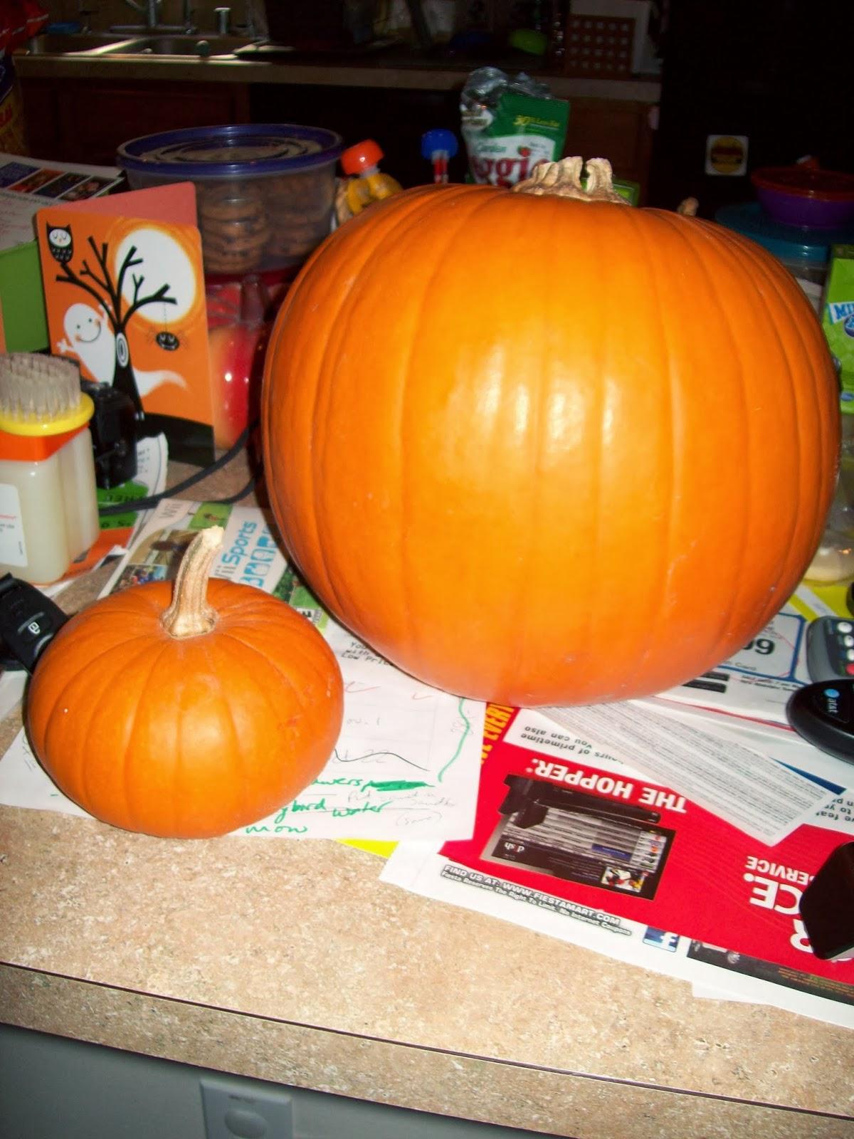 Pumpkin Patch - 114_6575.JPG