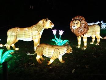 2018.12.03-096 lions