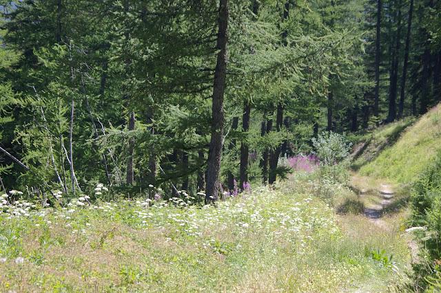 Sur le chemin de Vallon Claous (St-Paul-sur-Ubaye) : biotope de nombreuses espèces (1980 m). 7 août 2009. Photo : J.-M. Gayman