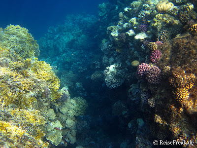 011 Ägypten Dez 2014 - Marsa Alam - Coraya Bay IMG_0292