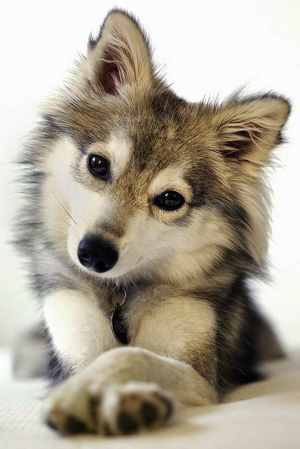 https://lh3.googleusercontent.com/-_KQpcHE5jd0/VEavVoH-6hI/AAAAAAAAaAE/TlwIt3I-jEs/w506-h750/chien29.jpg