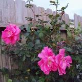 Gardening 2012 - 115_1275.JPG
