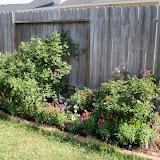 Gardening 2011 - 100_7807.JPG