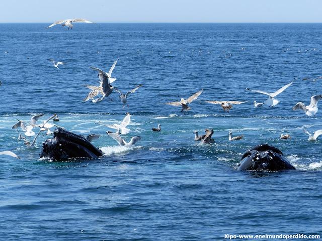 avistamiento-ballenas-cape-cod.JPG