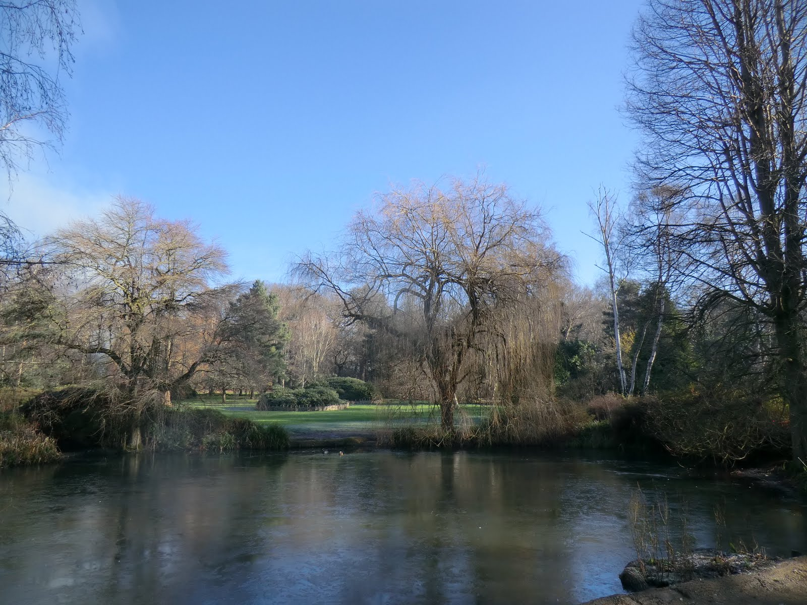 CIMG2284 Thomson's Pond, Isabella Plantation