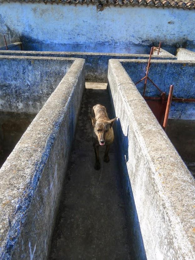 Finca Para La Cría De Toro Bravo En Venta Con 2 Casas A Reformar Plaza Toros Salamanca 400 Has 3 000 000 Aldeasabandonadas Com