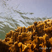 Buck Island Reef - IMGP1174.JPG