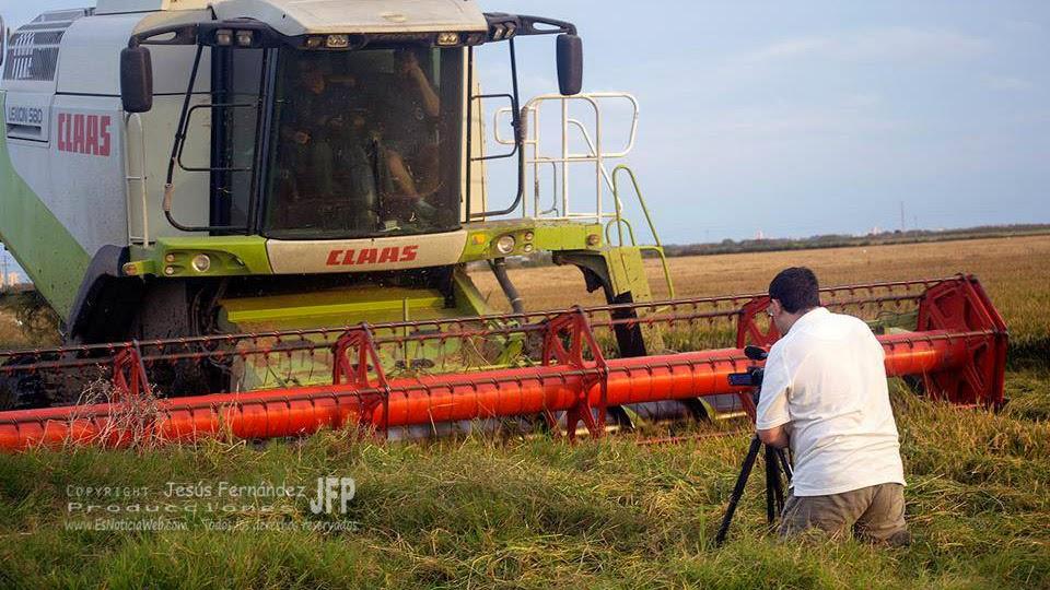 Cultivo de arroz en la Albufera de Valencia
