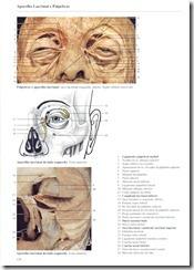 128 Aparelho Lacrimal e P_lpebras