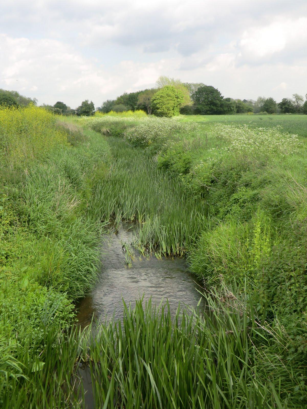 CIMG1209 Mill stream near the Medway