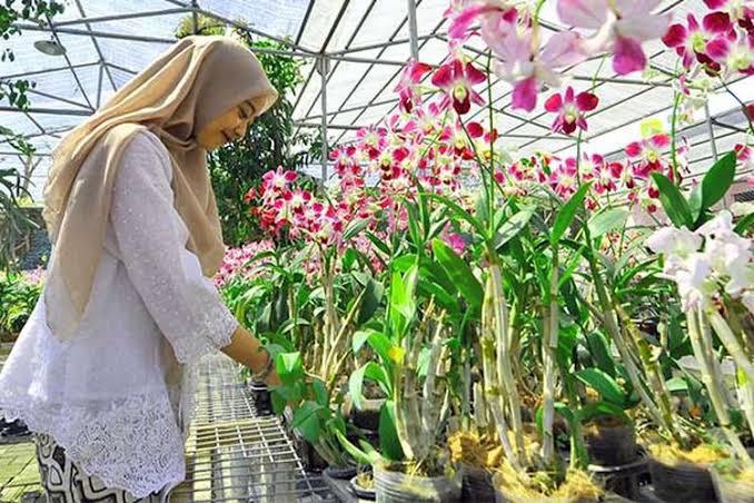 Khasiat Menanam dan Koleksi Bunga di Rumah
