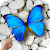 Magic Touch: Butterflies file APK for Gaming PC/PS3/PS4 Smart TV