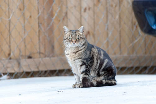 feral cat on the street