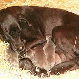Star & True Blues February 21, 2008 Litter - HPIM0888.JPG