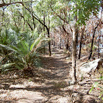 Contrast between burnt and unburnt bush either side of the track (20387)