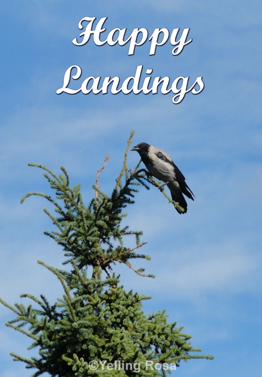 [Happy+Landings+by+%C2%A9+Yelling+Rosa+02%5B5%5D]
