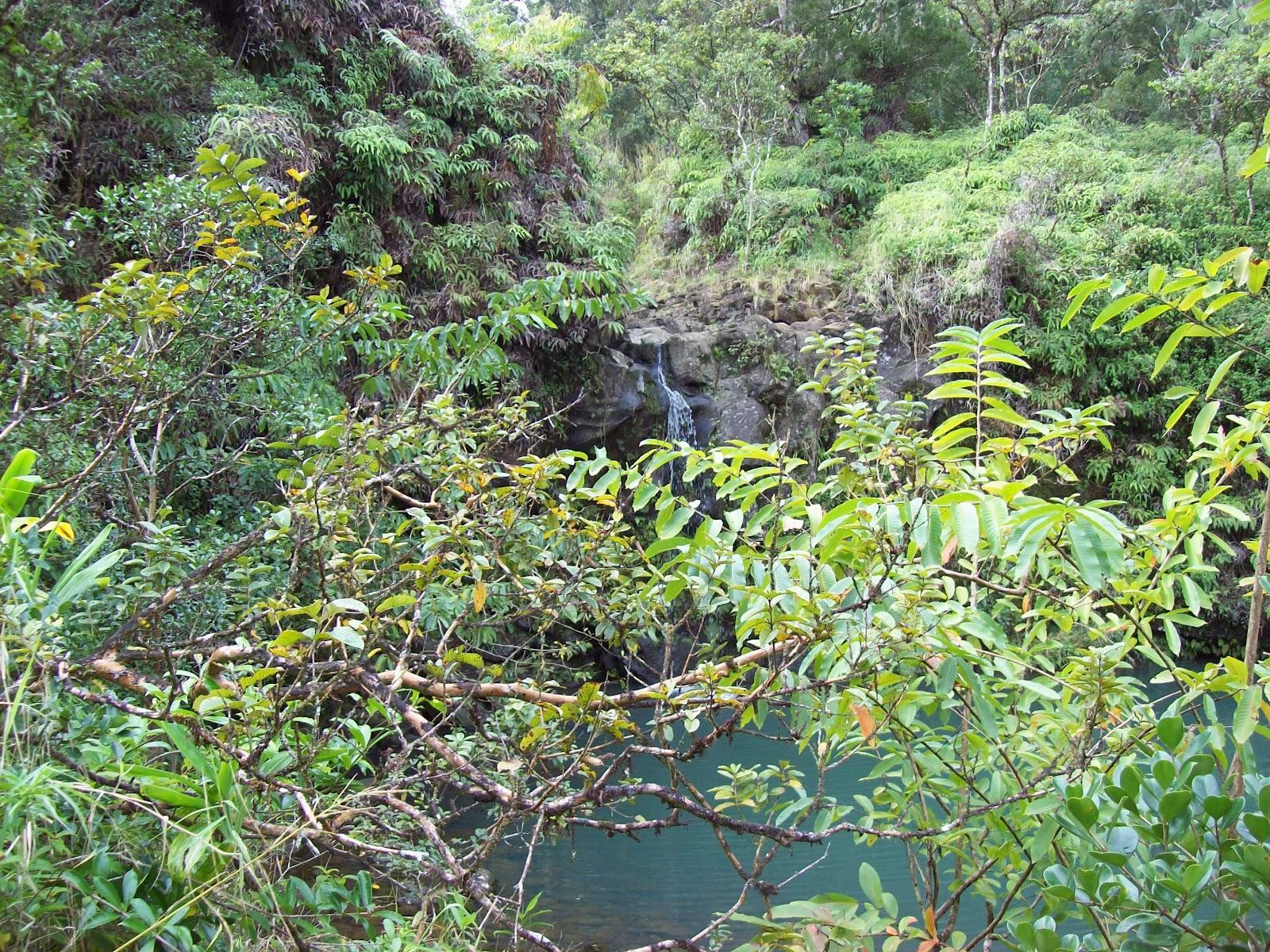 Hawaii Day 5 - 100_7409.JPG