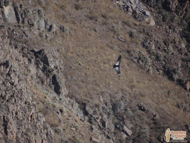 Visitar Cañón del Colca Peru 13