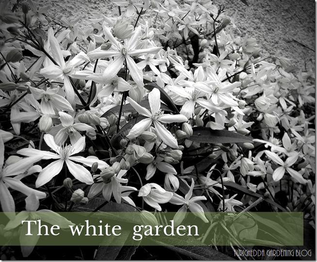 •the white garden (5)