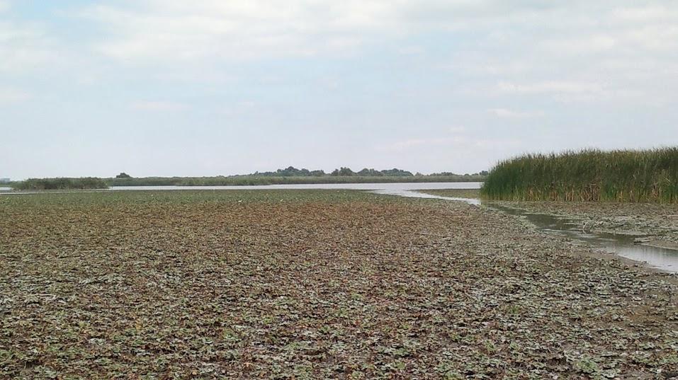 """02.09.2012 – Un episod inedit : O """"zbenguiala"""" prin Lacurile Gorgovei - Ce inseamna Delta Dunarii pe """"ape mici""""..."""