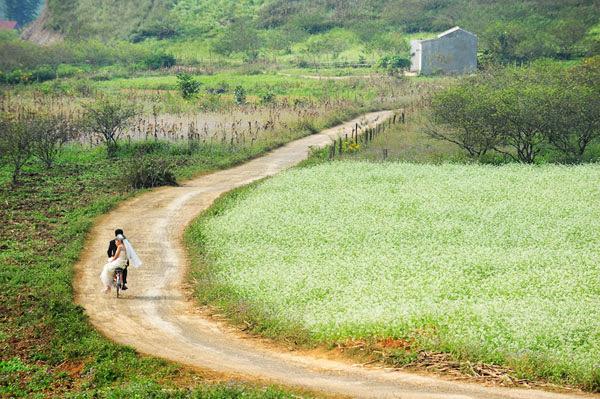 thung lũng hoa cải trắng
