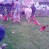 démo travail du sol avec ânes mesnières 2009